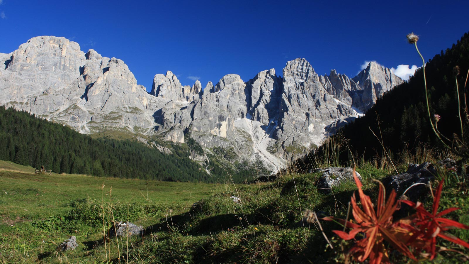 view of the Dolomites in summer with orange flower